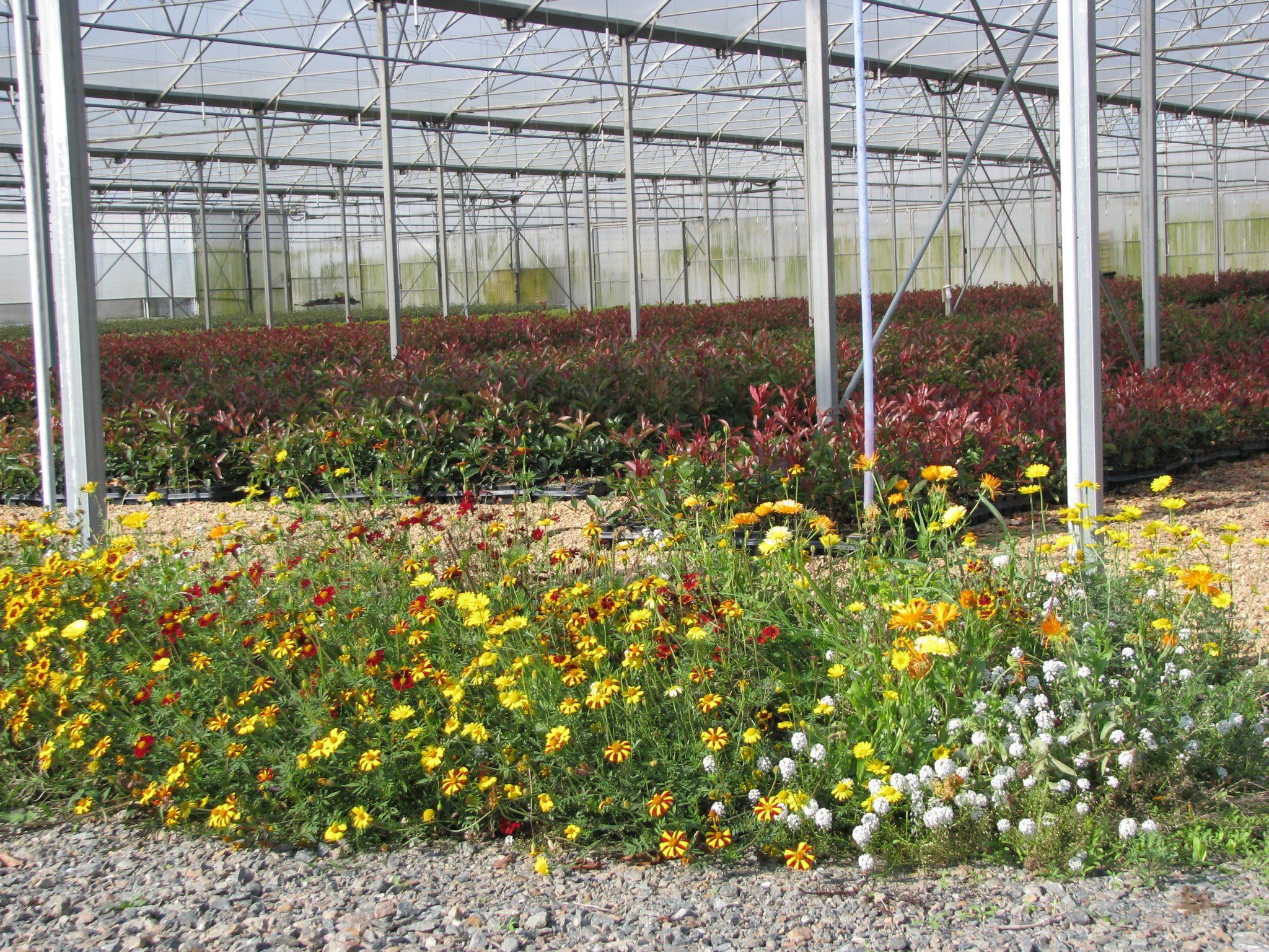 Fleurs de la Nature PBI
