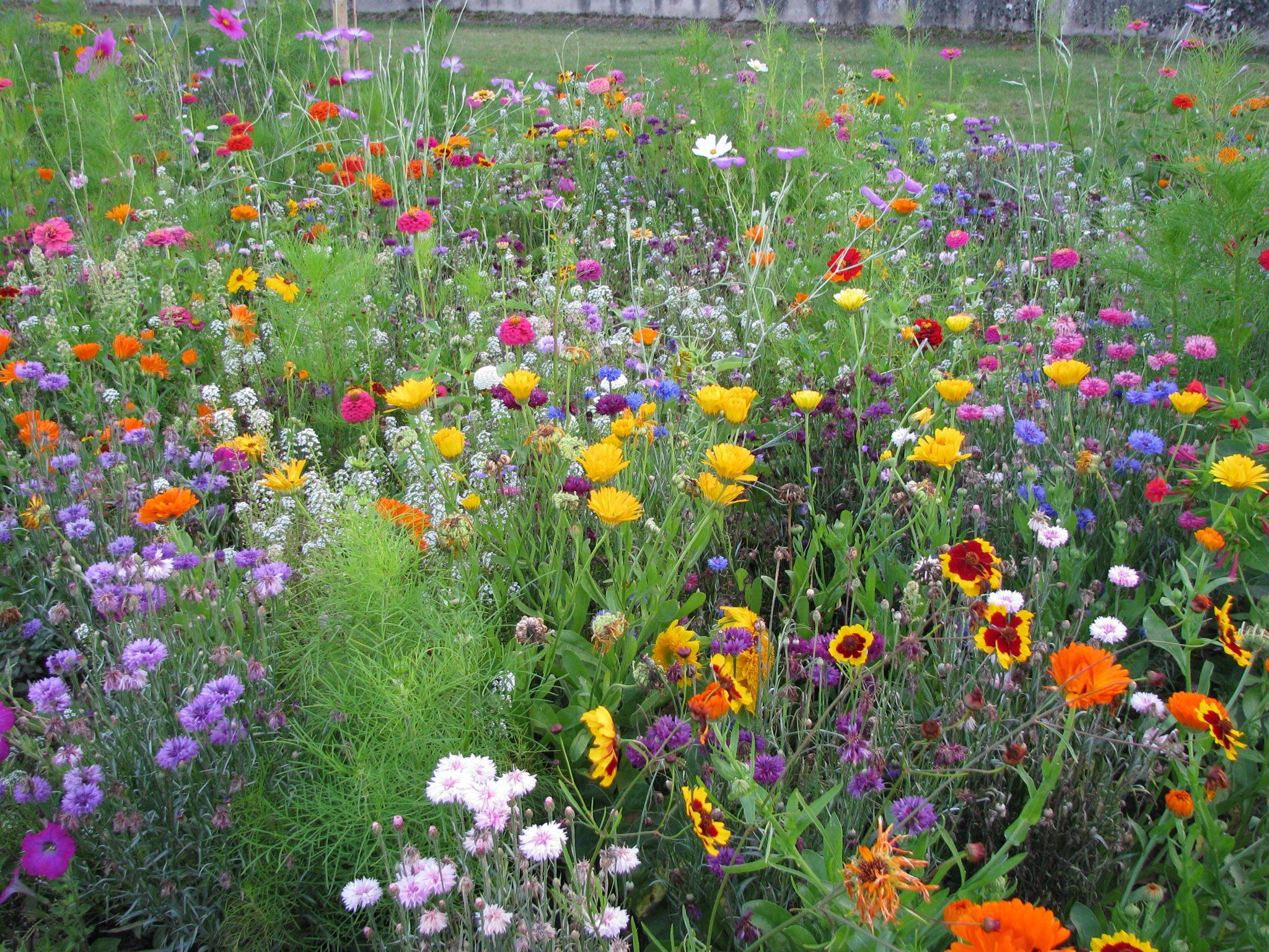 Fleurs pour Papillons