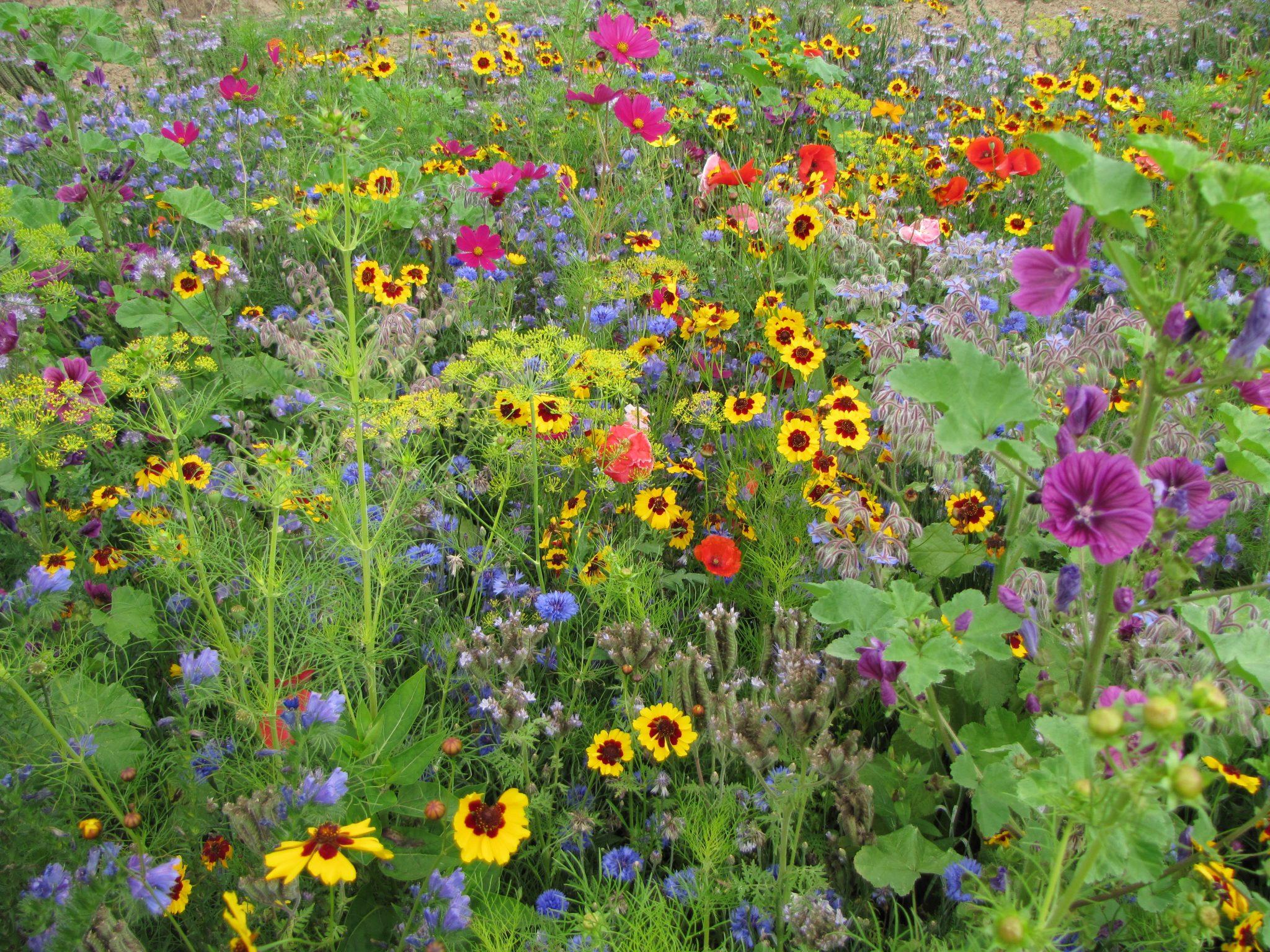 Fleurs Miel et Papillons