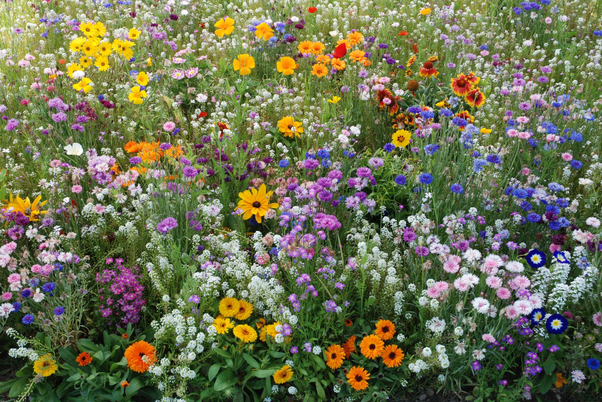 Fleurs Reflet des Prés