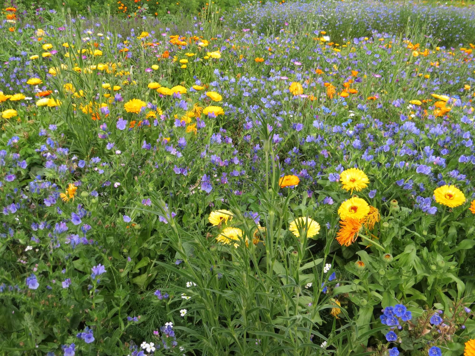 Fleurs saxicoles