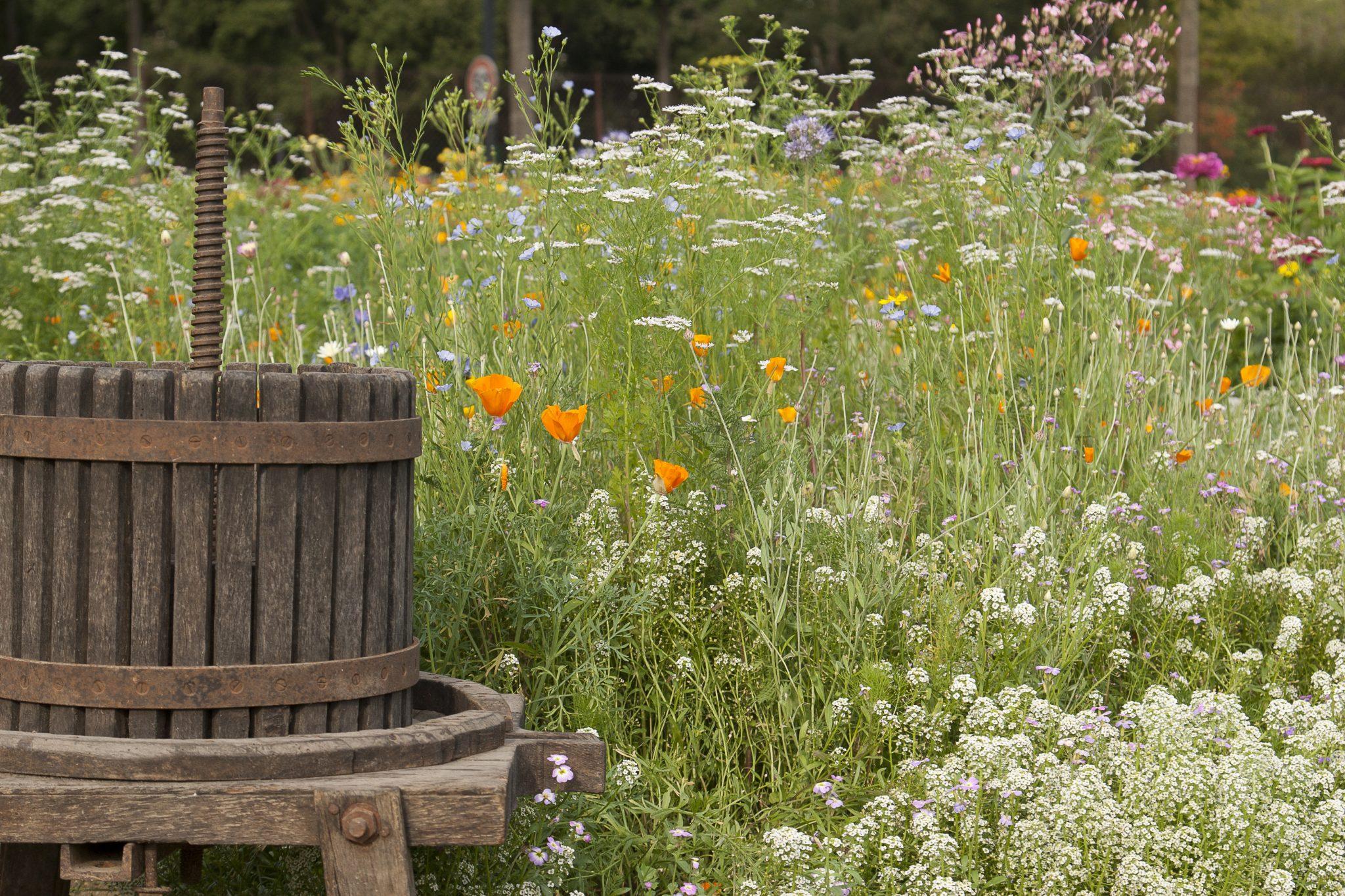 Fleurs Vignes & Vergers