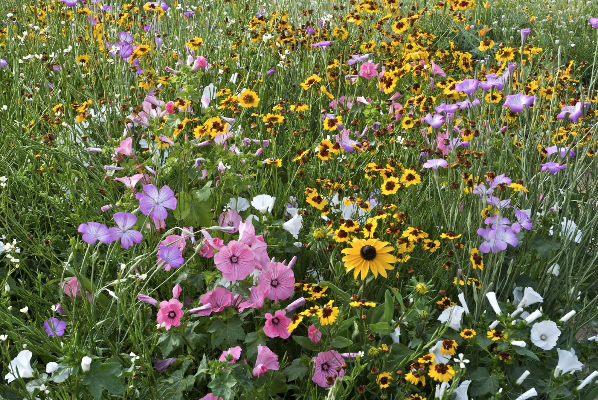 Fleurs Milieux Humides