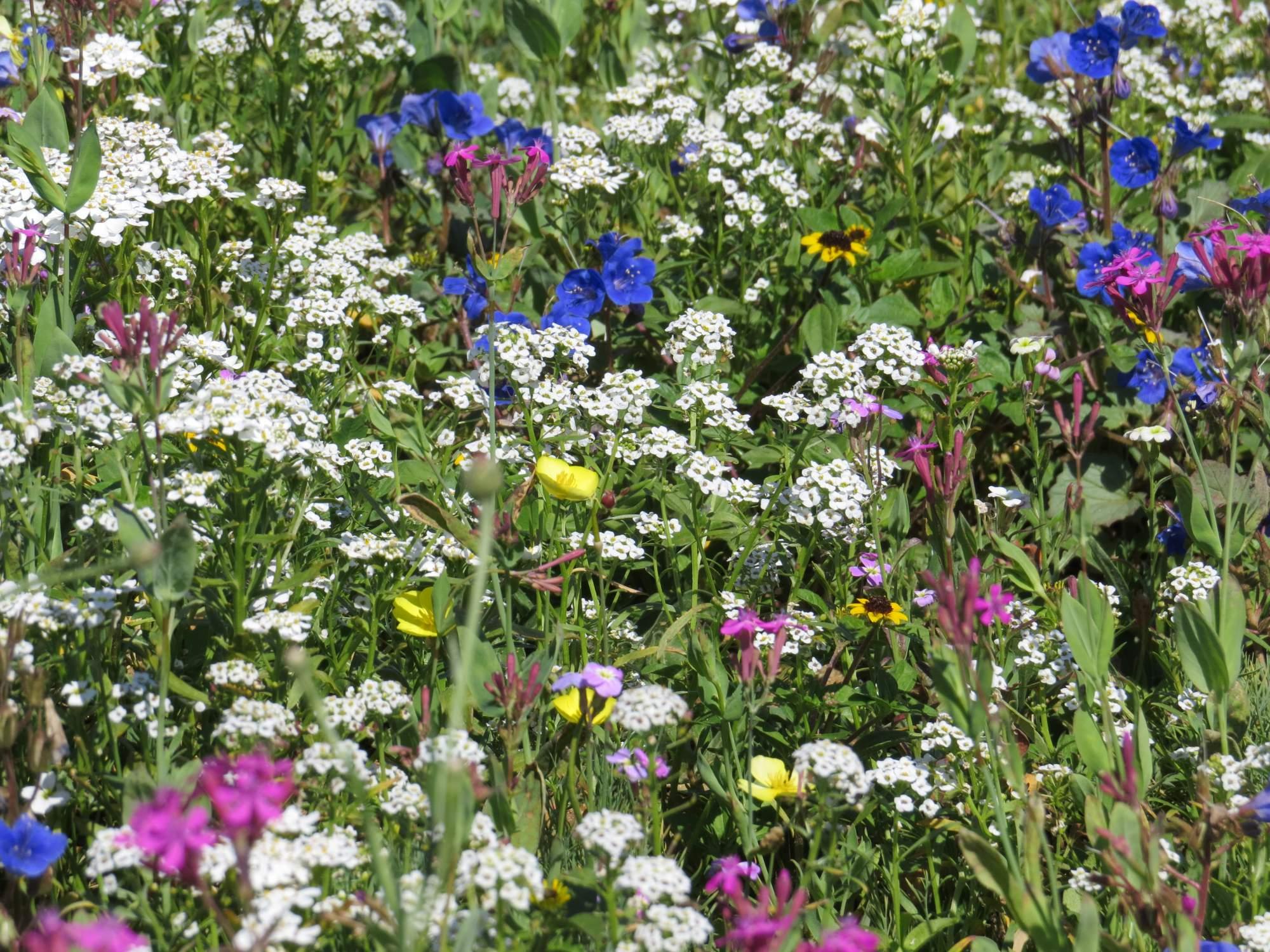 Fleurs Ultra-courtes