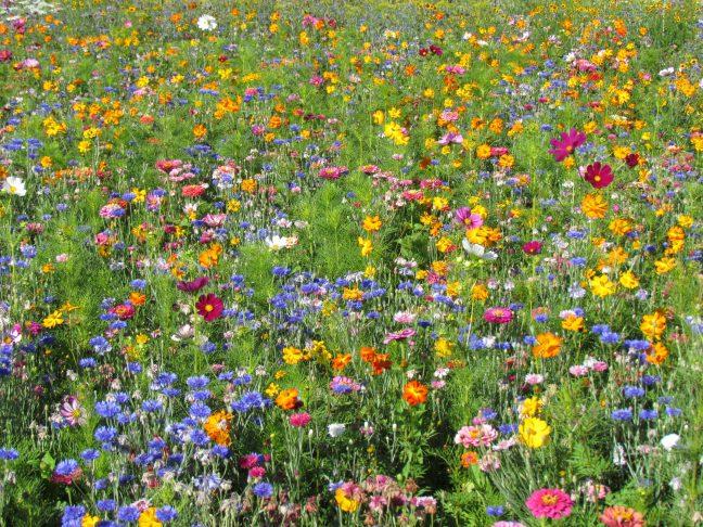 Jachère Fleurs Hautes